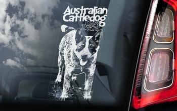 Australian Cattle Dog 4 Hondensticker voor op de auto  Per Stuk