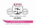 Kivo Complete Maaltijd SPECIAAL VOOR PUPPY'S 500 gram Verp. 10 kg
