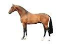 Paardenribben met veel vlees 1 kg