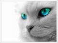 BeefMix Kitten/ Kat  250 Gram