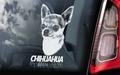 Chihuahua 3 Hondensticker voor op de auto Per Stuk