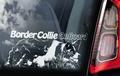 Border Collie 2 Hondensticker voor op de auto Per Stuk