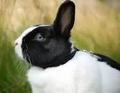 Heel tam konijn met huid 1 kg